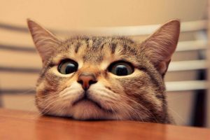 kedi-bakimi-nasil-yapilir