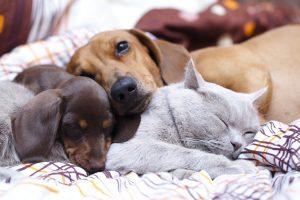 kedi-kopek-kusma-nedenleri